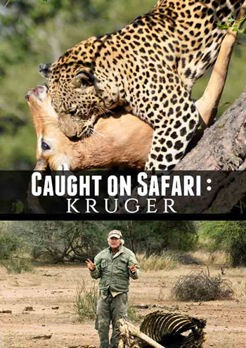 Caught on Safari: Kruger