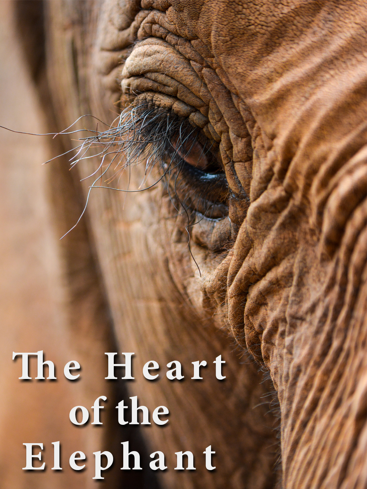The Heart of the Elephant